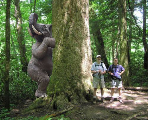 elephant-hiding-behind-tree.jpg