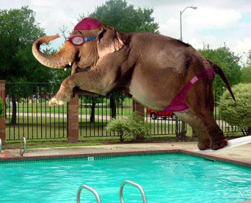 Elephant Jumps in Swimmingpool