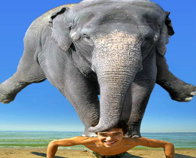 Elephant Massage