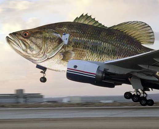 Fishplane Take off