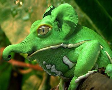 Funny Green Elephant