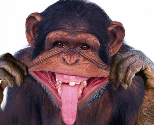 có cái này hay hay đưa vào cho ace chém nha Funny-monkey