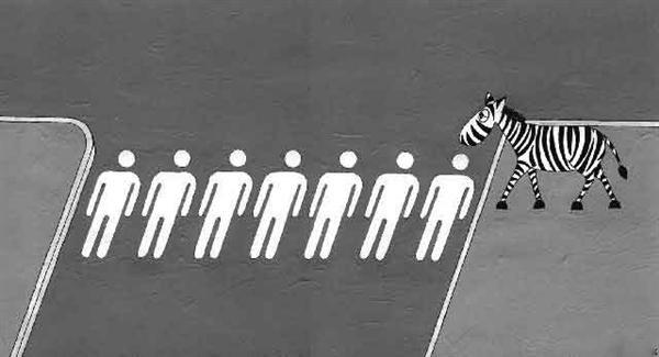 Zibra Crossing